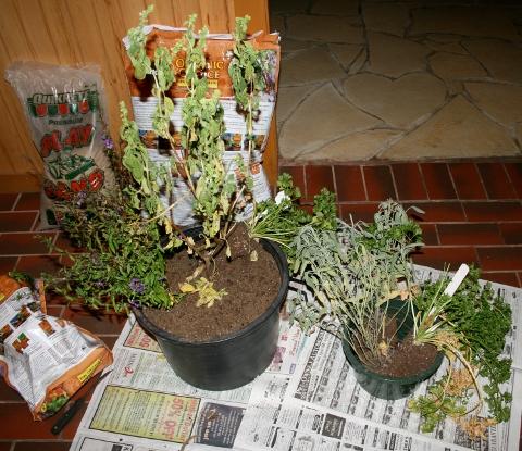 Indoor Outdoor Herb Garden Uncityslicker
